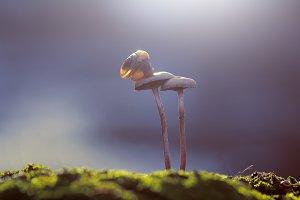 snail, mushroom, insect, macro,