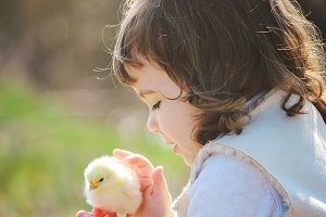 The child holds a chicken.