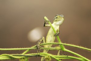 lizard, macro, insect, animal,