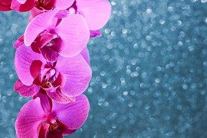 орхидея на блестящем фоне