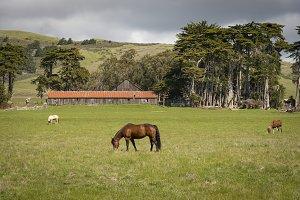 Pastoral scene Northern California