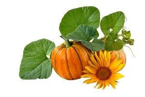 pumpkin with green leaves