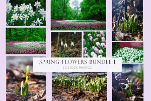 Spring flowers bundle 1
