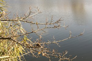 Tree branch over the river, leafless