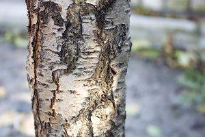 Tree trunk, felled trees