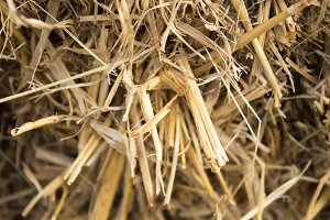 Background of dry straw, macro shot.