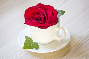 Red rose in the white cup, romance