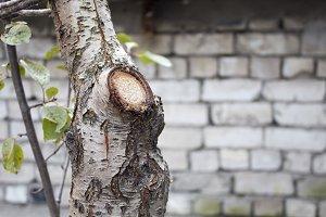 Tree trunk, felled trees.