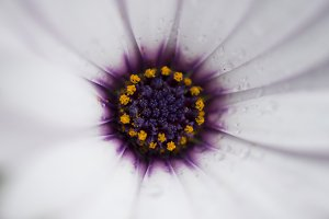 Flower with water