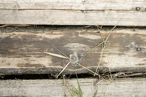 Old boards. Wooden background of old
