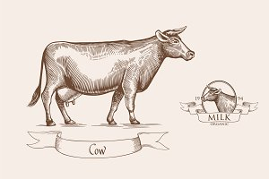 Cow illustration. Grunge label