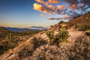 Sunset over cholla and cactuses near Javelina Rocks in Saguaro National Park
