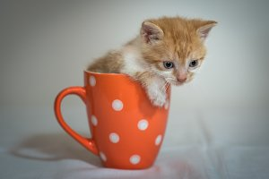 Kitten in orange cup