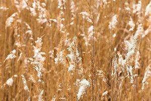 autumn grass,  close-up