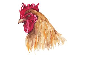 Watercolor cock rooster bird animal