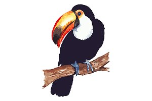 Vector toucan animal bird isolated