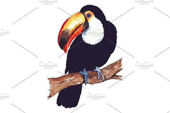 Vector Toucan Animal Bird Isolated