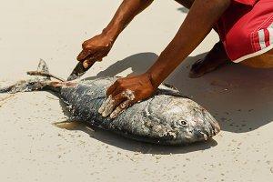 Man cutting fresh tuna fish