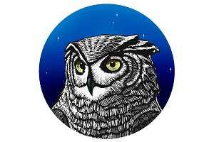 Owl Night.