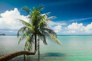 single palm tree hanging over lagoon