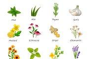 Healing herbs and medicinal plants