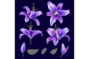vector ultraviolet lily flower blossom set