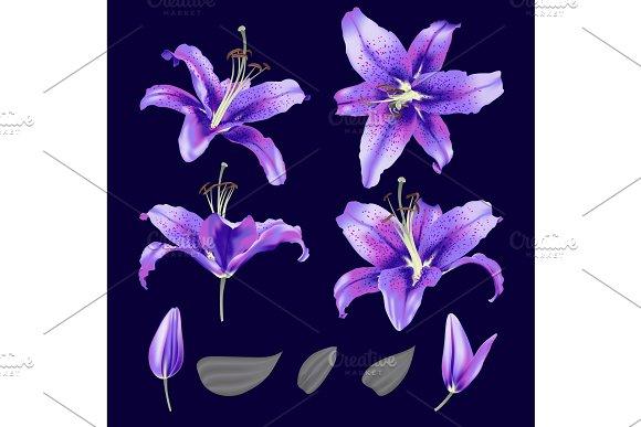 Vector Ultraviolet Lily Flower Blossom Set