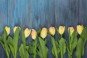Row of yellow tulips
