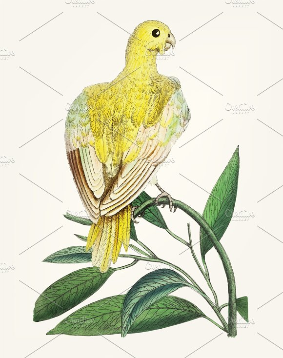 Hand Drawn Of Bird Yellow Parakeet