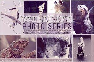 Wildlife Photo Pack