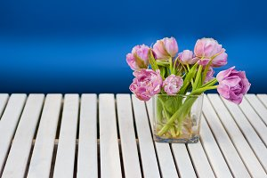Purple tulips in the glass vase on the white wooden table and blue background