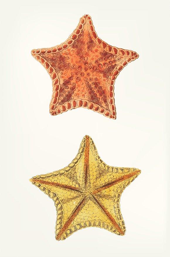 Hand Drawn Of Starfish