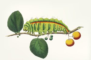 Hand drawn of a caterpillar