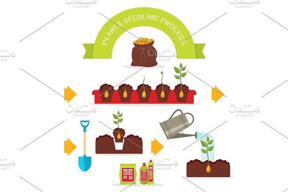 Plants Seedling Process Vector Set