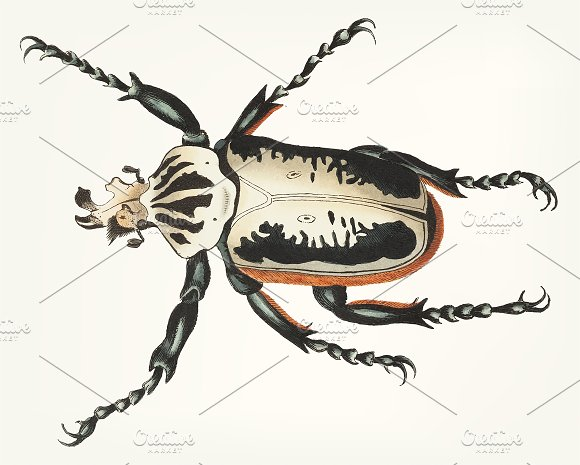 Hand Drawn Of Fork Headed Beetle