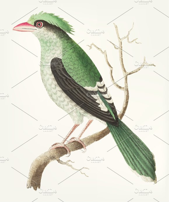 Illustration Of Chinese Roller