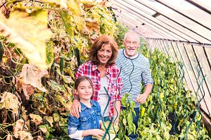 Senior couple with grandaughter gardening in the backyard garden.