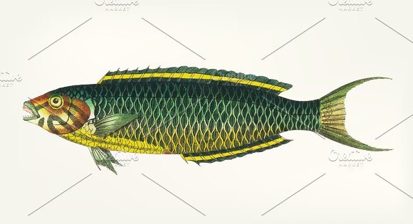 Illustration Of Green-yellow Fish