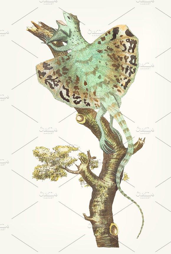Illustration Of Flying Dragon