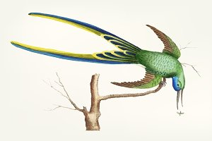Illustration of hummingbird