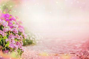 Background with pink garden flowers