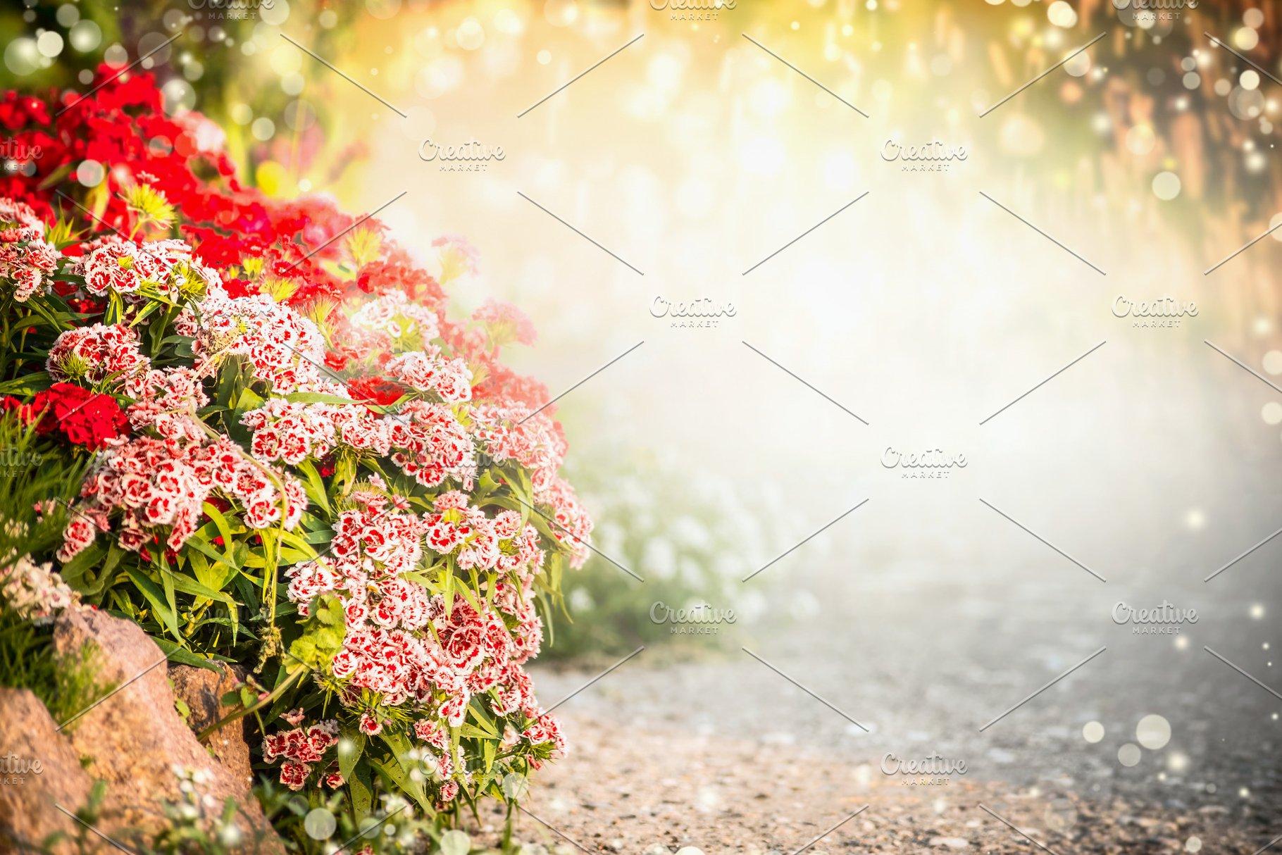 Turkish Carnation Flowers In Garden Nature Photos Creative Market