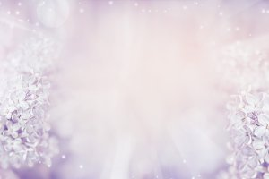 Pastel lilac flowers background