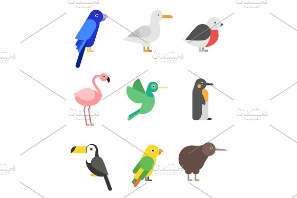 Exotic birds in flat style. Stylized pictures set in Graphics