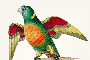 Hand drawn long tailed green parrot