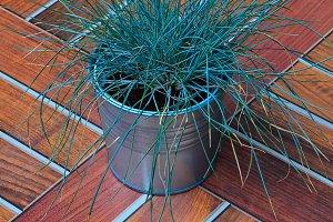fresh green grass in a metal bucket