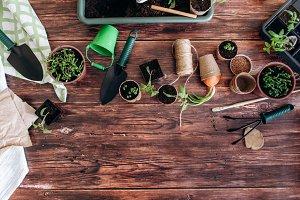 Planting seedling