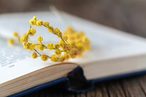 Spring yellow flowers on book