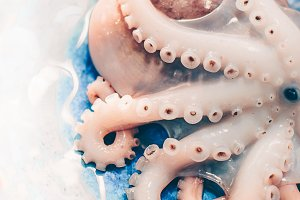Fresh octopus  in a turquoise dish