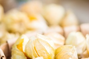 Cape gooseberry (Physalis)